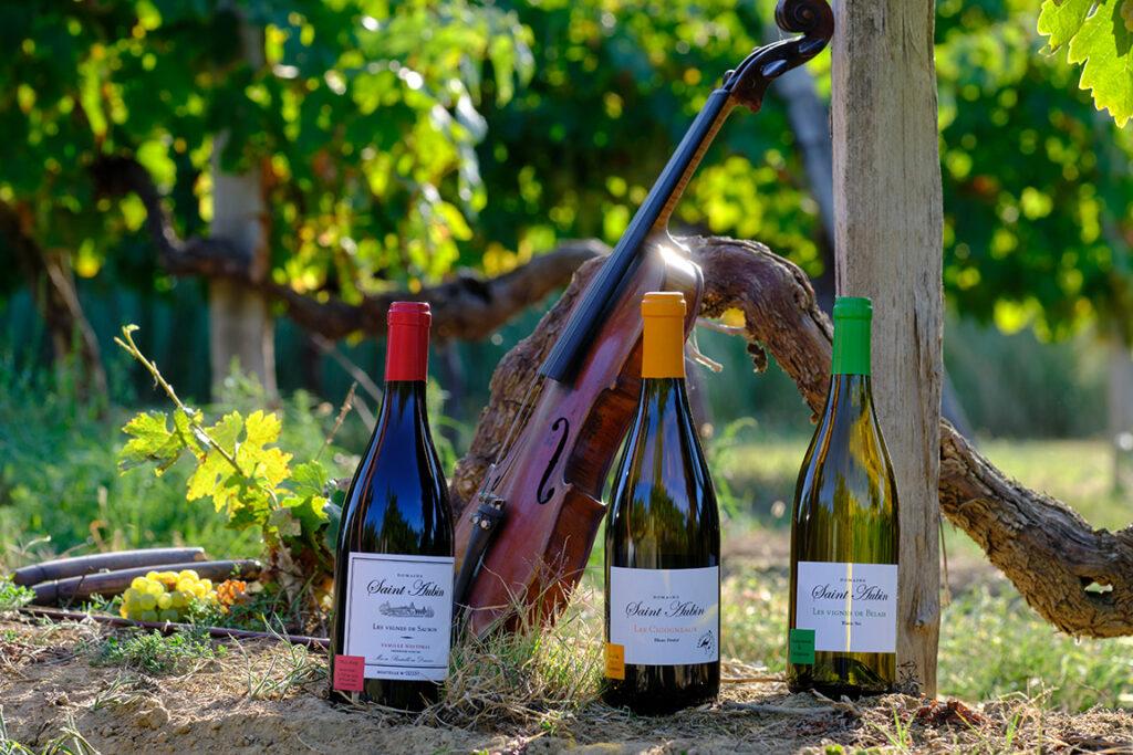 Vins produits dans le vignoble de Saint-Aubin