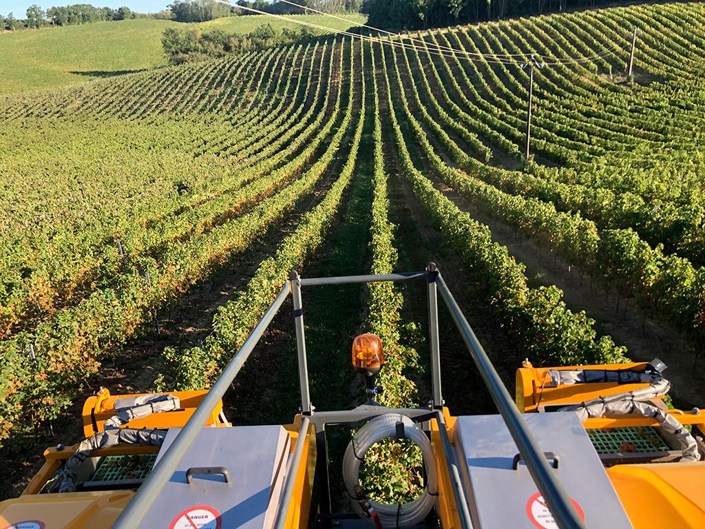 Rangs de vigne au domaine de Saint-Aubin